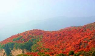 汝州第三届红叶旅游文化节10月23日开幕