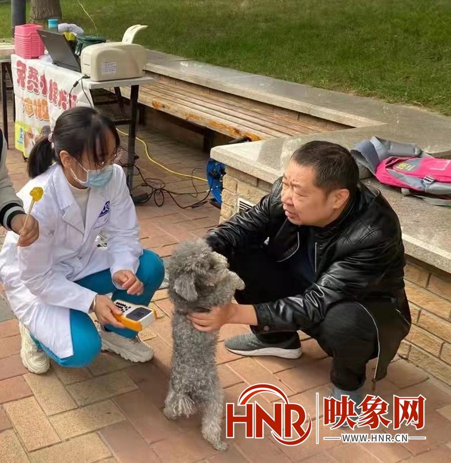 """郑州:家门口就可以免费办狗证 快来给宠物上个""""安全险"""""""