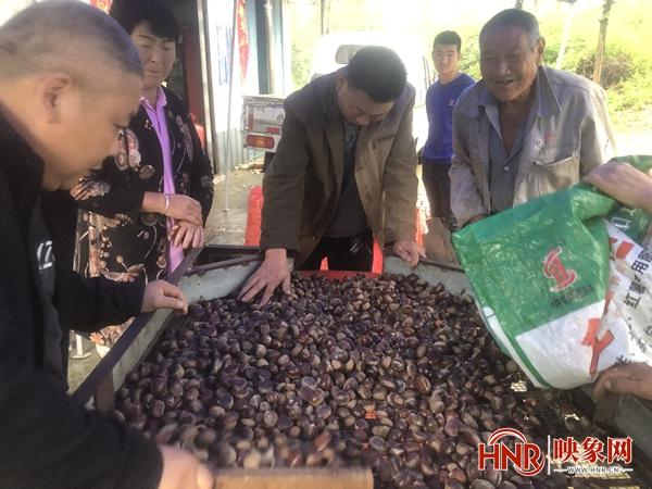 鲁山县:板栗嫁接改良 助力群众增收